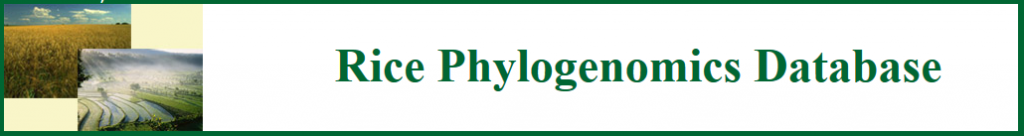 RicePhylogenomicsdatabase
