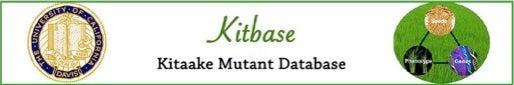 kitbase