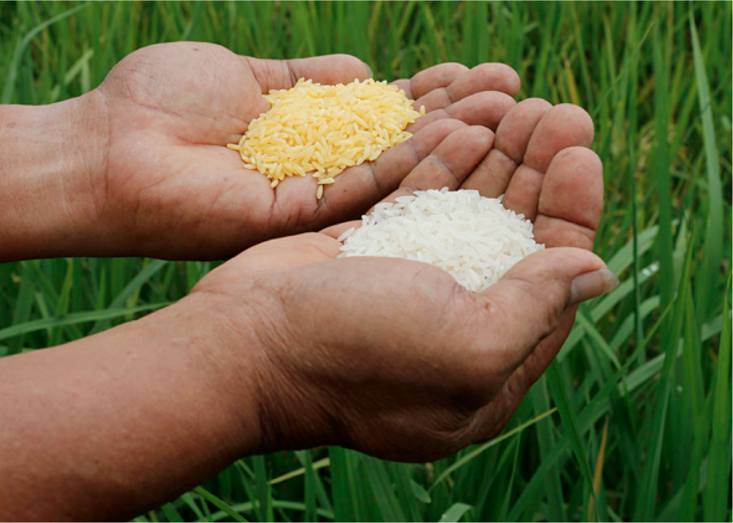 rice-sites-image